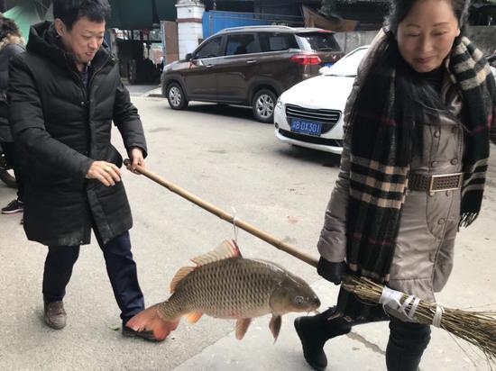重庆市民长江中钓起罕见大鲤鱼 32斤卖了800元