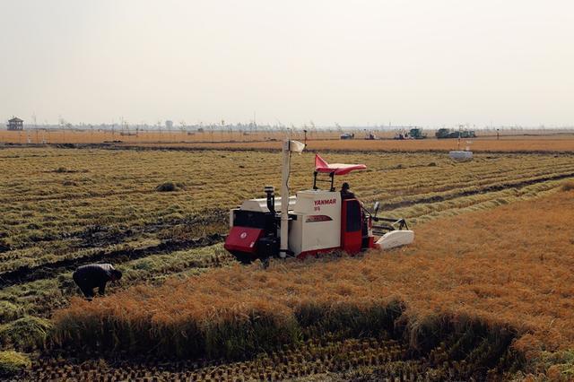 重庆进境粮食指定口岸获批 将辐射带动云贵川等地