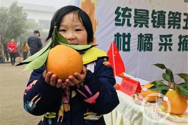"""渝北统景柑橘熟了邀你采摘 果农送来果王""""打擂"""""""