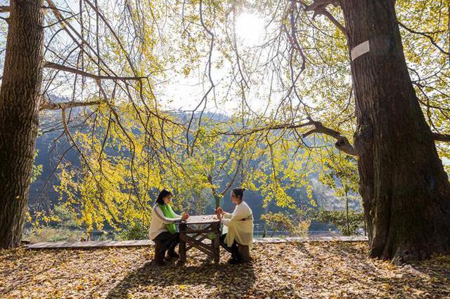 金佛山、武陵山等18处森林旅游地将限时免费开放