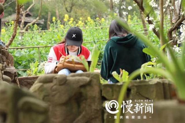 又到赏花好时节 来看最新版重庆高校赏花攻略