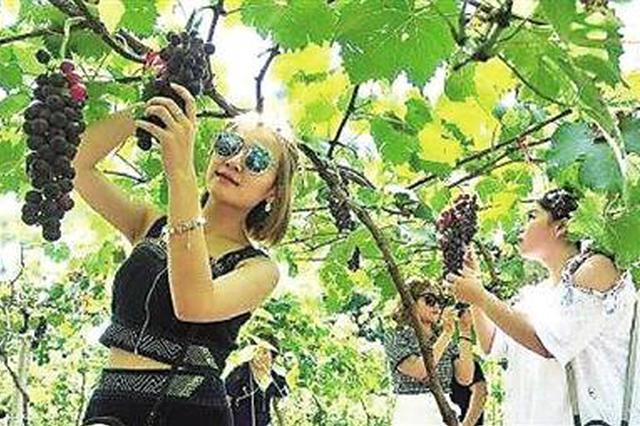 重庆:4个大学生弃城投农 回乡种葡萄年赚百万