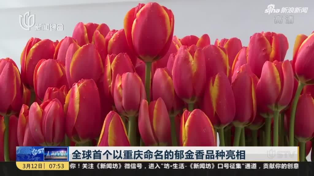 全球首个以重庆命名的郁金香品种亮相