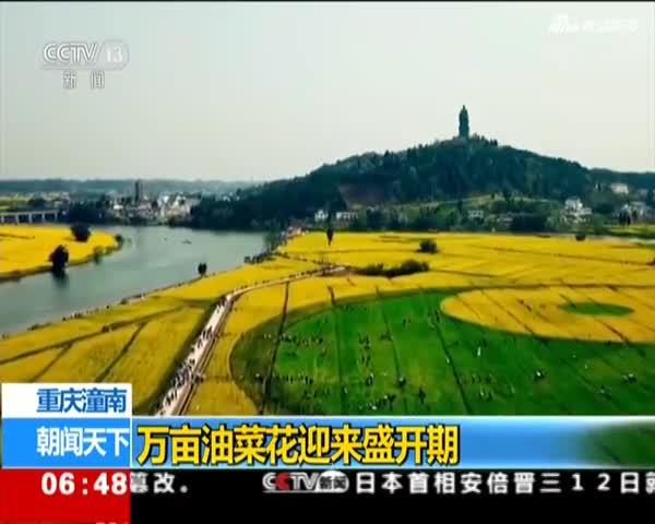 重庆潼南:万亩油菜花迎来盛开期