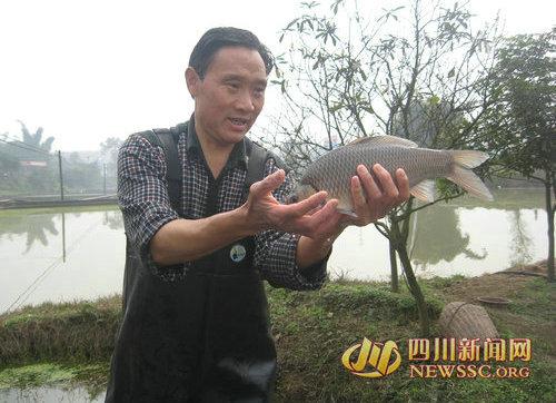 李申学展示他饲养了10年的岩原鲤