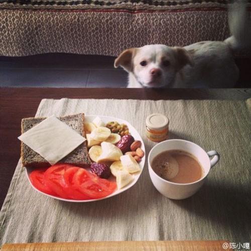 """""""懒人""""早餐 汪星人都会做"""