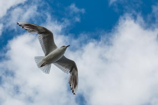 千山鸟拍绝 拍摄飞鸟的9个小技巧