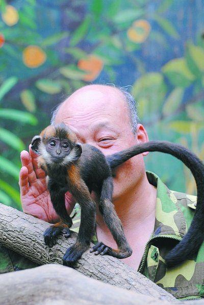 图为张帮胜在舔小猴子的屁股。