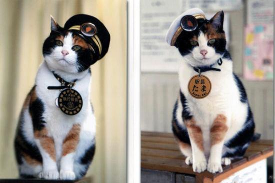 """日本傳奇喵星人""""貓站長""""心臟衰竭去世"""
