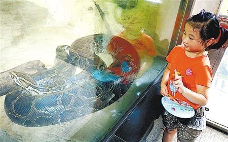 巨蟒养到150斤 夫妻含泪送动物园(图)