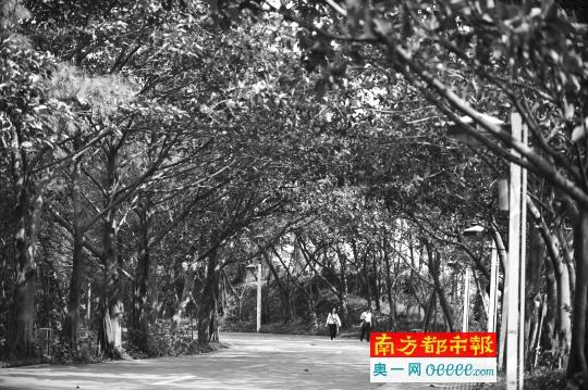 市民在白水带风景区散步。绿树成荫的白水带景区风景秀丽,是绿道网中的一个点。南都资料图