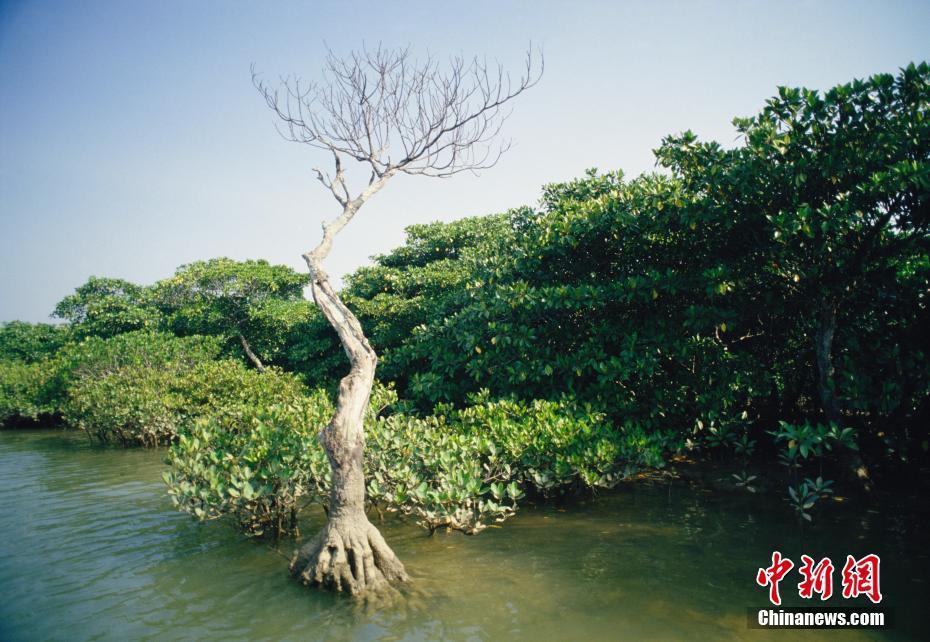 海上绿洲——东寨港红树林