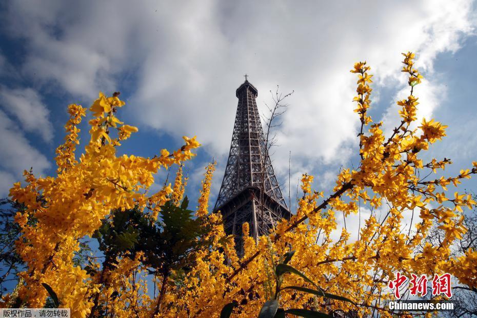 巴黎迎来好天气 埃菲尔铁塔下花团锦簇
