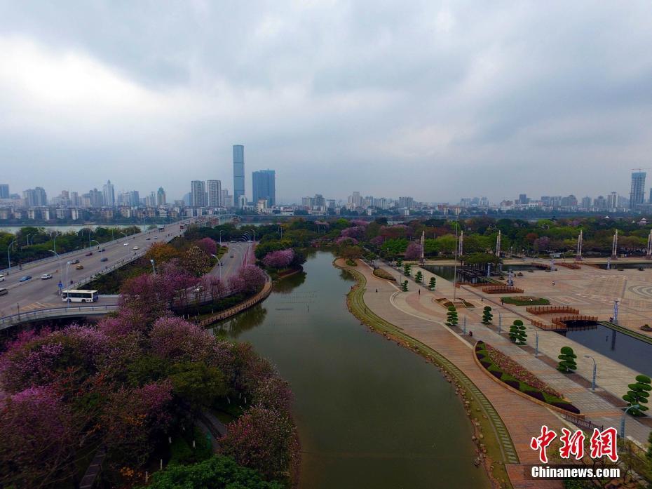 每年3月至4月,满城紫荆花开,让这座西南重工业城市变身为花园城市。