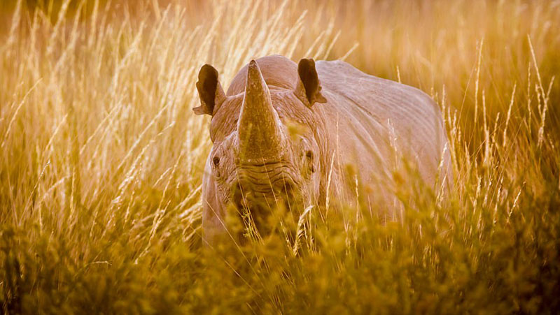 英国摄影师拍摄非洲野生动物获大奖