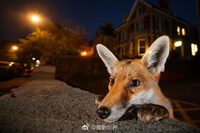 享誉全球的年度野生动物摄影师大赛2016年年度优秀作品