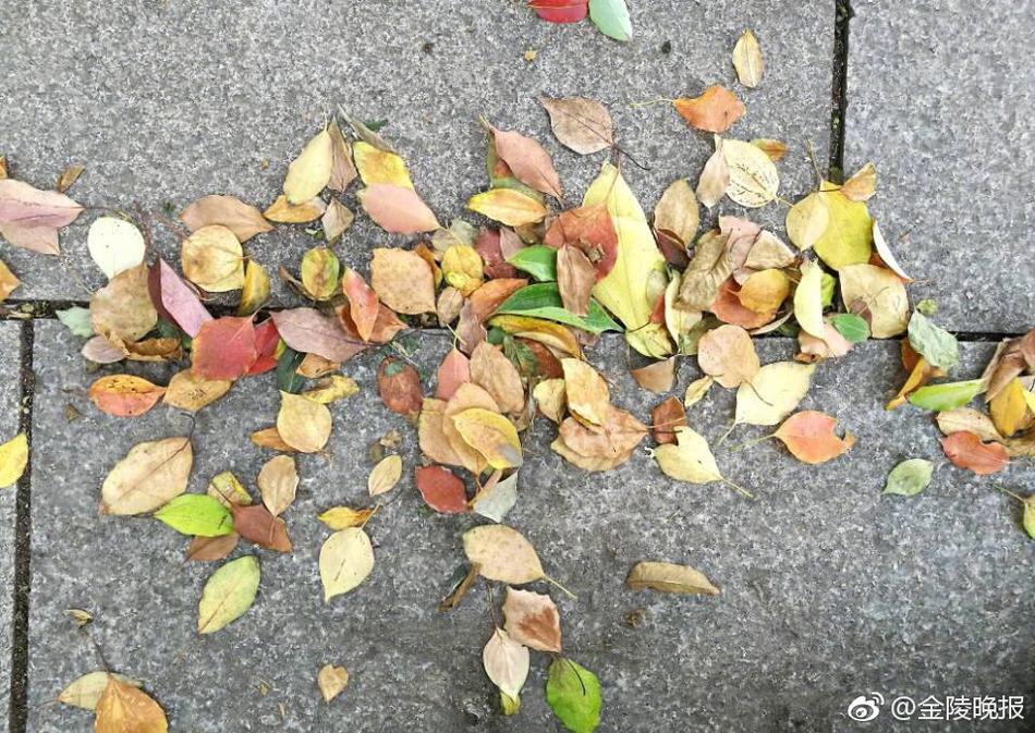 凉风阵阵 落叶缤纷图片