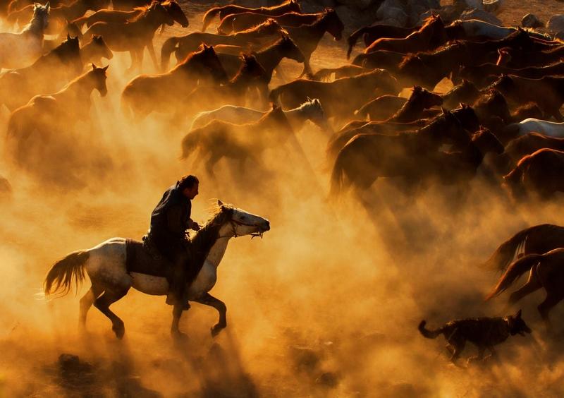 (Feyzullah Tunc)在开塞利拍摄下了一组壮观的万马奔腾图.-土耳图片
