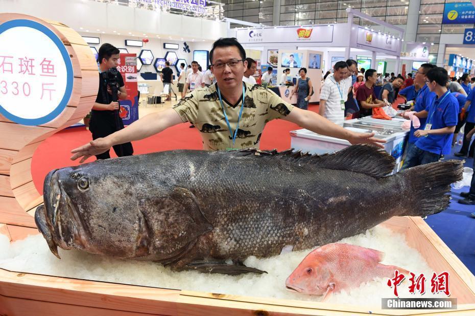 """福州""""渔博会"""" 330斤巨型石斑鱼亮相"""