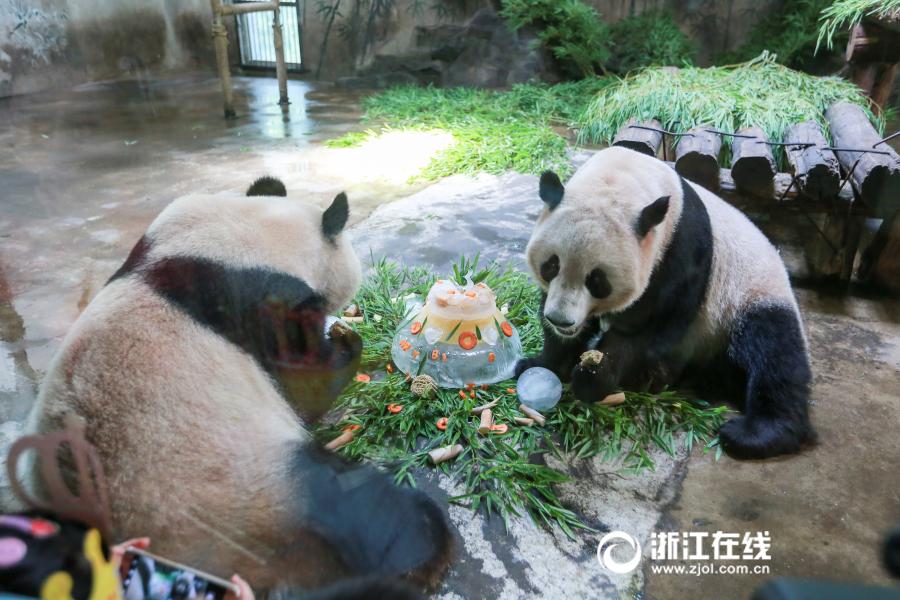 """大熊猫哥俩的""""生日趴"""" 清凉""""蛋糕""""萌化众人"""