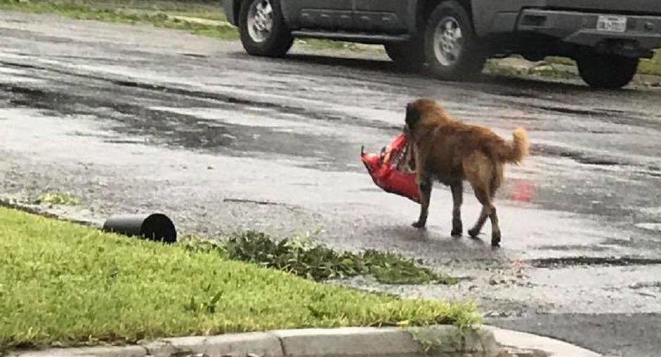 美国得州遭遇飓风