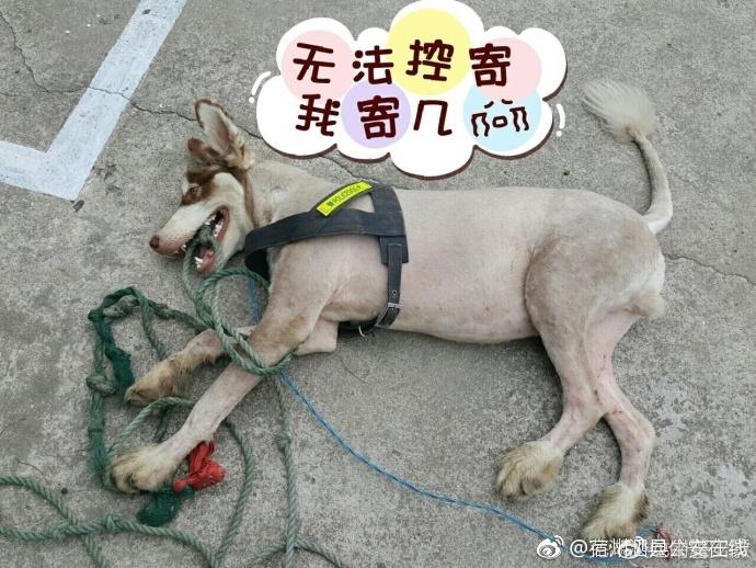 诚博国际app官网