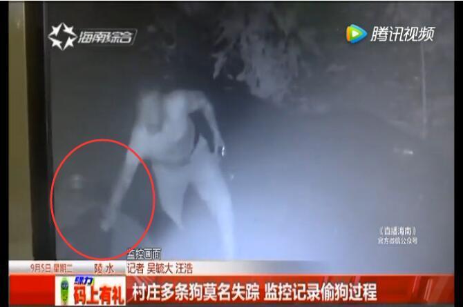 陵水村民家的狗在晚上频频失踪 查看监控视频后震惊了
