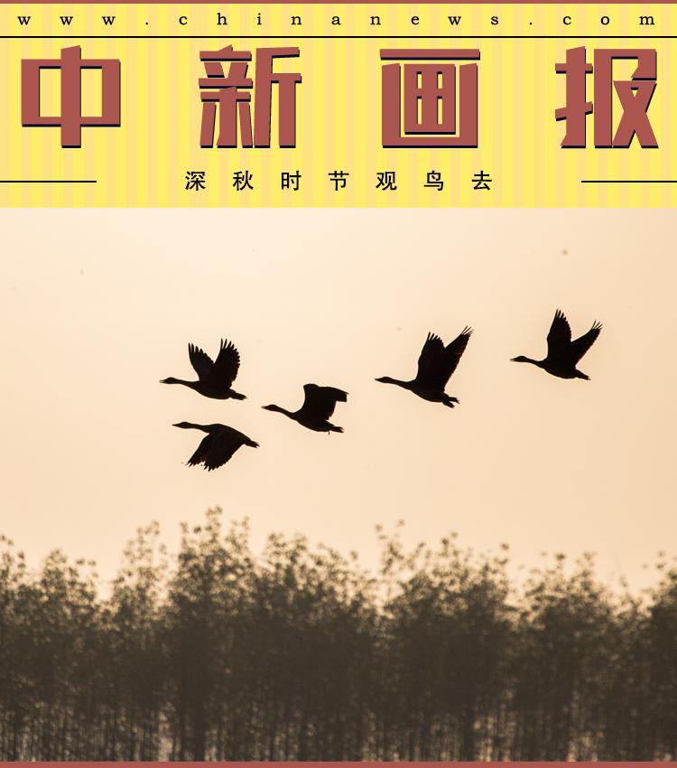大奖网app官方下载