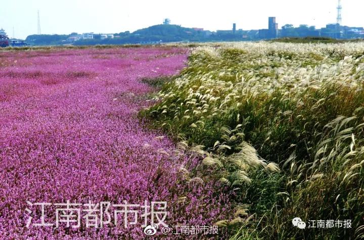 中国近现代史纲要有关广东的历史人物