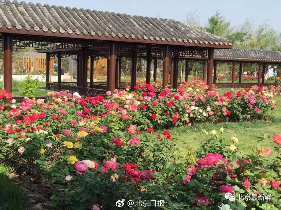 公安部通报打击春节档电影侵权盗版 吴京等出席