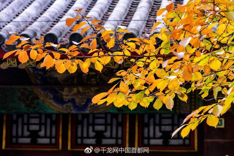 北京市商务局:餐饮企业暂停婚宴、酒席等群体性聚餐活动