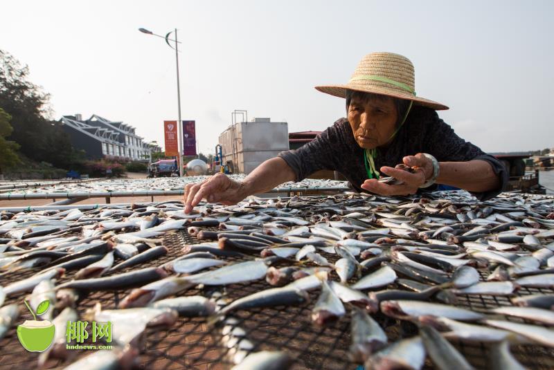 休渔期来临 万宁渔民忙捕捞 储干货