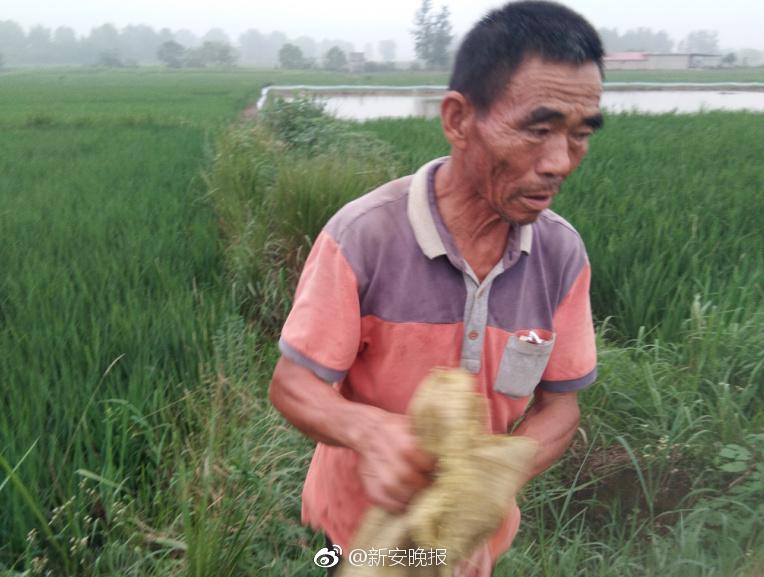 1.5万斤中华鲟一夜死光 养殖户:4年3次被投毒
