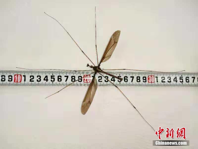 礼制于器更符合对中国设计艺术的描述
