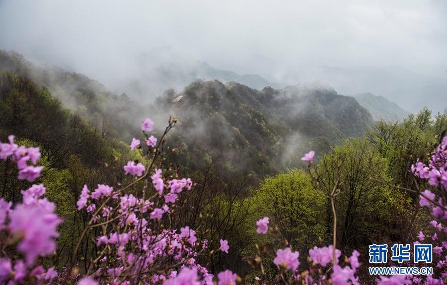 """风雨中,团团云雾在山间飘荡,给八仙山带来了""""仙气儿"""". 新华网发"""