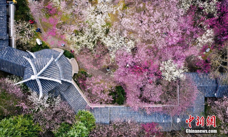 南京雨花梅岗满园春色美如画