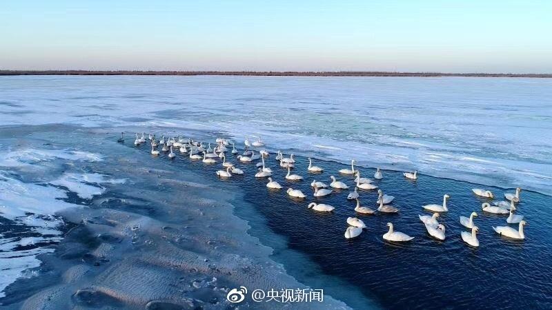 2019年马经通天报另版