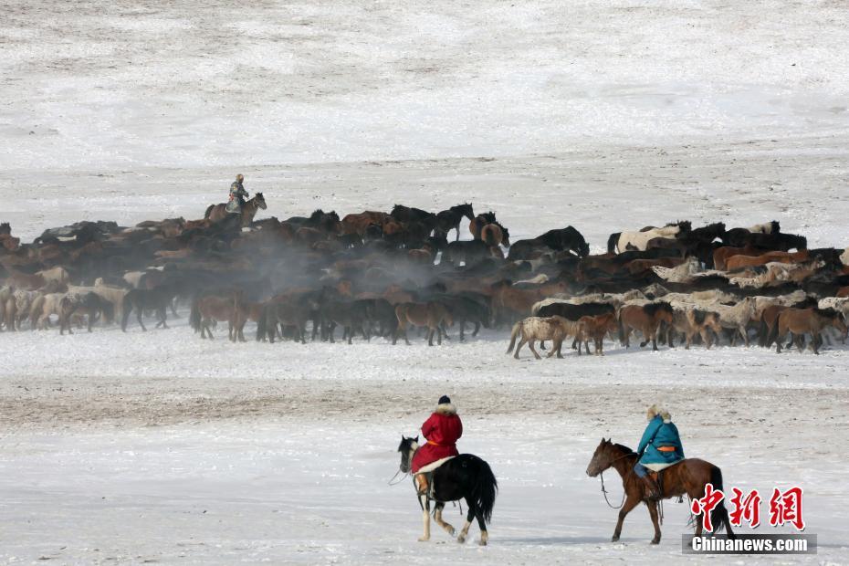 锡林郭勒进行套马驯马表演