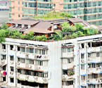 武汉居民楼顶藏花园