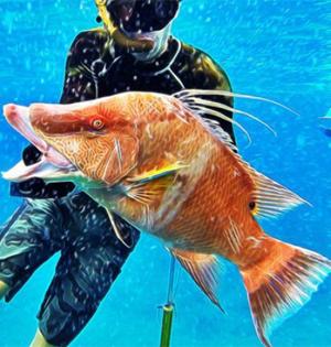 巴哈马群岛怪鱼多:鲯鳅颜色绚烂