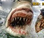 女教师拍大白鲨进食特写