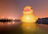 大黄鸭亮相南京莫愁湖公园