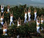 瑜伽美女桔园扮橘美人
