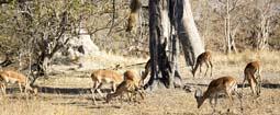 一周图片:豹子高空跳下捕捉高角羚瞬间