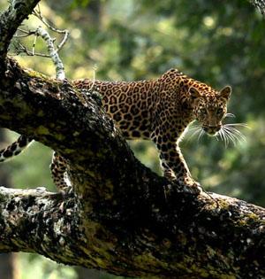 年度生物图片精选:丛林王者