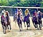 中国武汉国际赛马节开幕