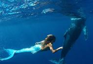 现实中的童话:美人鱼与鲸同游