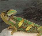 居民家门口发现绿色怪物