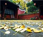 贵州缤纷秋色迷你眼