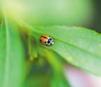 农场以虫治虫避用农药